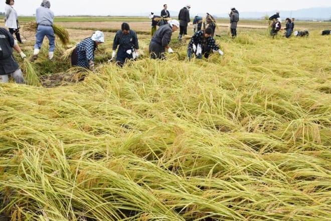 H30新潟米作りWS04